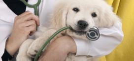 Martedì 8 settembre a Acquamorta  Microchip e Iscrizione all'Anagrafe gratuita per i vostri cani
