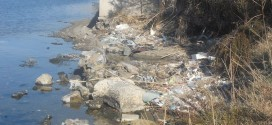 LAGO FUSARO : LE PALME CRESCONO SUI RIFIUTI. il Coordinamento delle Periferie