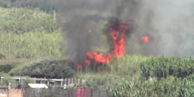 Vasto Incendio nella Spiaggia Romana in fiamme un canneto, sterpaglie e vegetazione: VIDEO E FOTO