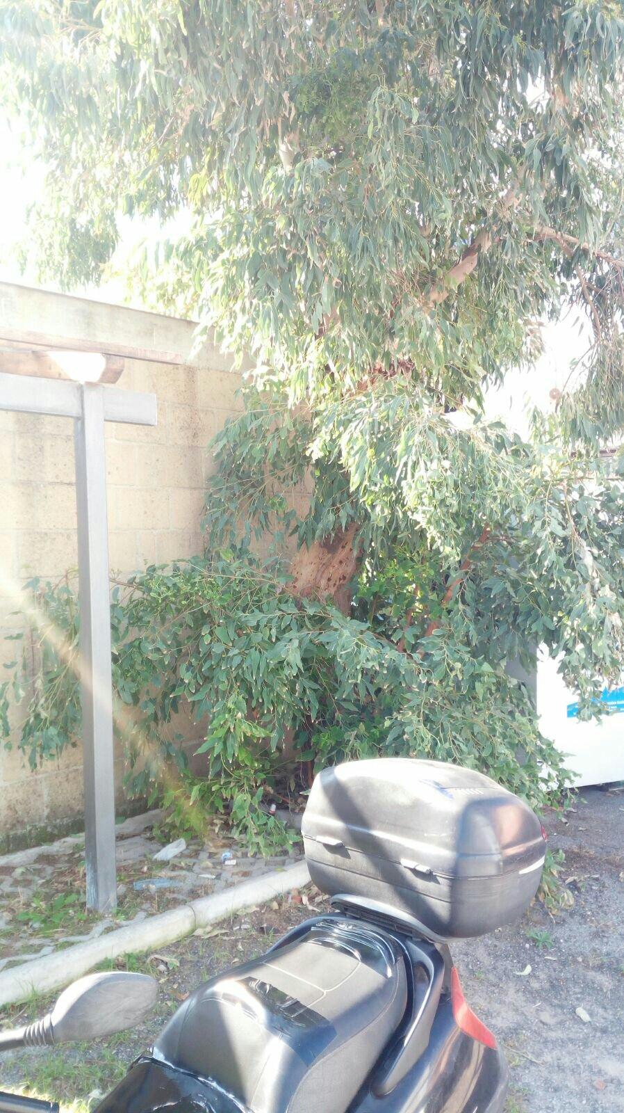 Torregaveta forever ripulisce l area antistante il via for Papino arredo