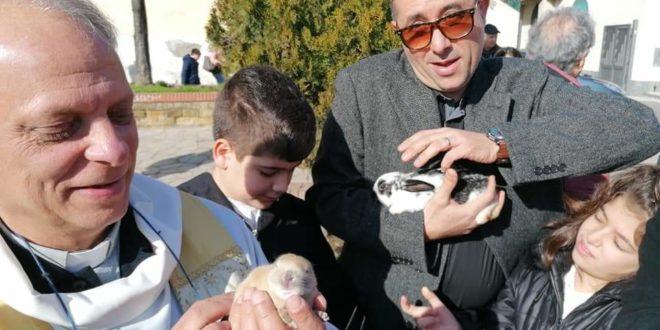 Monte di Procida. Benedizione degli Animali di padre Gianni Illiano in piazza XXVII GENNAIO.Foto di Nico Massimo.